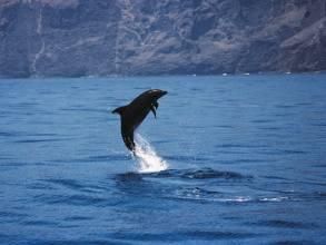 besonderes über delfine
