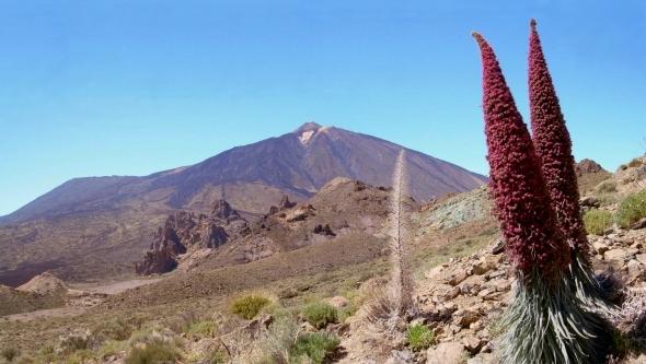 Teide Nationalpark Teneriffa Los Roques Sternwarte Teide Natternkopf
