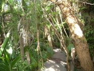 jungle park teneriffa dschungel